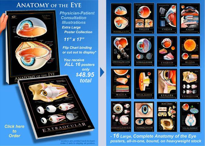 Eye Wall Charts Eye Wall Charts Unlimited Home